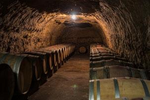 VinoLoire - Vincent Delaby - Excursions privilégiées dans les domaines vignobles du Val de Loire - Visites découverte autour de Chinon