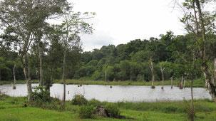 Reserva Nacional San Rafael, San Rafael National Reserve
