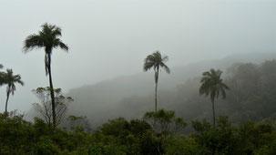 Parque Nacional Amboro, Amboro National Park, Amboro Nationalpark