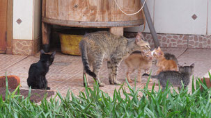 Procosara Farm Animals