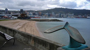 Wellington, Harbour