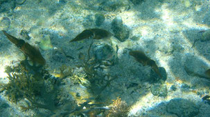 Bay of Islands, snorkeling