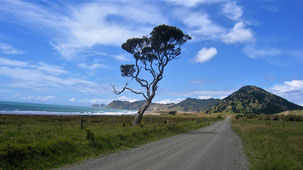 Bay of Plenty Road