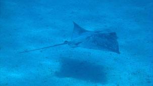 Bay of Islands, snorkeling