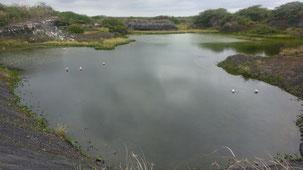 Posada de flamengos, Flamingo Lake, Puerto Villamil