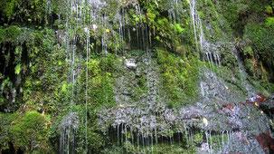 Catlins Conservation Park, The Catlins, South Island