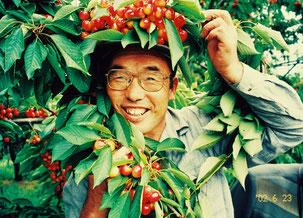 さくらんぼに囲まれる園主の画像若い時