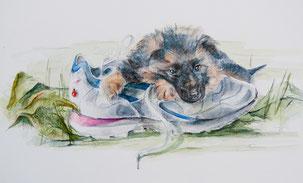 Nr. 672 Schäferhund Welpe