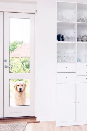 Fensterwetten Hund vom Niederrhein