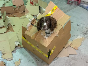 4 legged staff unpacking parcels