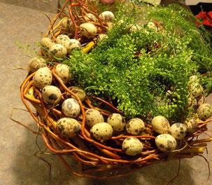 Ein Nest aus Hirtentäschl.