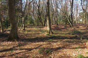 落ち葉さらいを終えてきれいになった林床