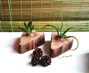macetero madera de mar, suculentas, maderasdelmar.com