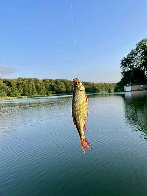 Angeln Drewensee Fisch Rotfeder Kinder angeln