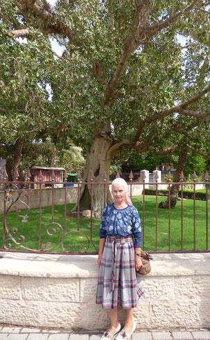 Территория Русской духовной Миссии в Иерихоне
