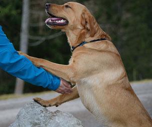 Tiergestütze Pädagogik Ausbildung: Verantwortungsvolles, einsatzfähiges und gut ausgebildetes Hund-Mensch-Team