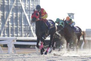 アサクサポイント号と鞍上の大畑雅章騎手     PHOTO by:(C)fanfan/H.Taniguchi