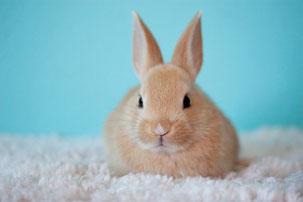 Tierversuche Naturkosmetik tierversuchsfrei Kaninchen Healthlove