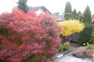 Herbst im Gästehaus Becker