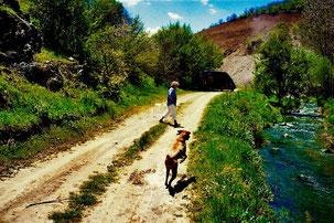 idyllischer Wegan einem Bach entlang