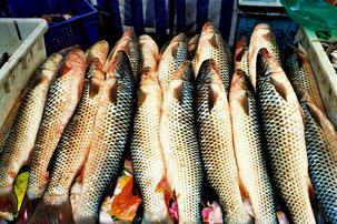 das Angebot an frischen Fischen war auffällig gross