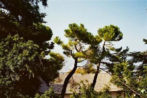 im Park der Villa Borghese