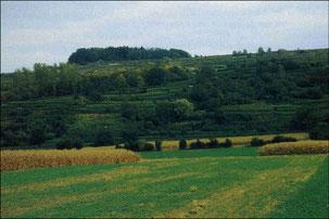 Lösterrassen bei Ringsheim