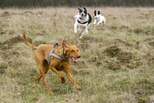 anti jagd training und impulskontrolle trekking dogs wandern mit hund. Black Bedroom Furniture Sets. Home Design Ideas