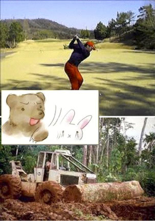 Deforestation by enjoying golf!