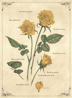 petal poetria - Rose- 腐蝕銅版画・手彩色 46x34cm 73,440円