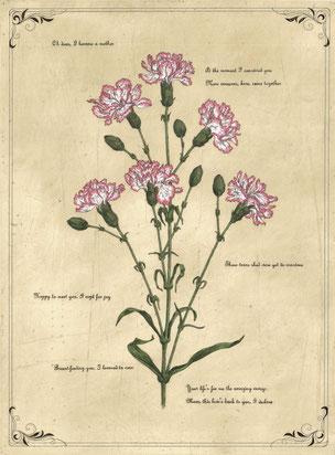 petal poetria -Carnation 腐蝕銅版画・手彩色 46x34cm 73,440円