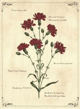 petal poetria -  Carnation  腐蝕銅版画・手彩色 46x34cm 73,440円