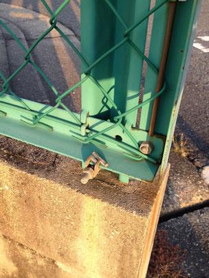 フェンスの基部にも巣を作りやすい