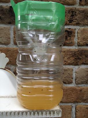 回収時:③の蚊取りペットボトル