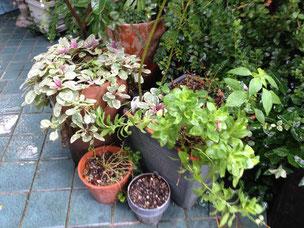 植物の鉢植えも寄せておくだけでも違います。 紐などで縛れば更に良し。