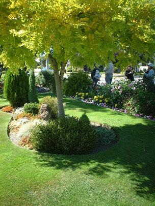 """植栽帯と芝生のエッジがこれも効いている 植えられたニセアカシア""""フリーシア""""も金色に美しく輝いている"""