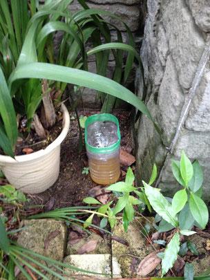 設置時:②の蚊取りペットボトル