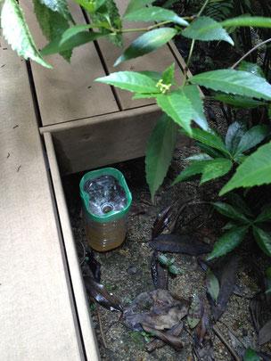 設置時:①の蚊取りペットボトル