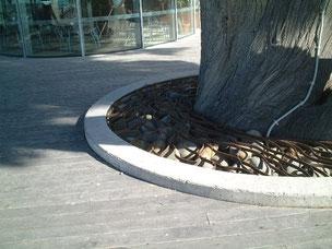 巨木の根元 大きめの角の取れた石とデザインされたアイアンでふたをしてある 上根を保護するにはとても良い方法だと思いました。