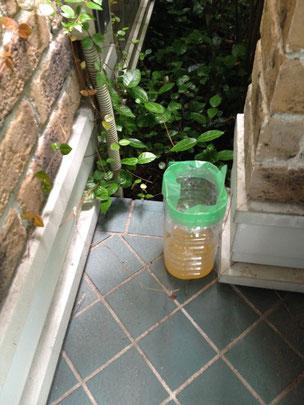 設置時:③の蚊取りペットボトル