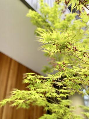 おすすめの植木 落葉樹