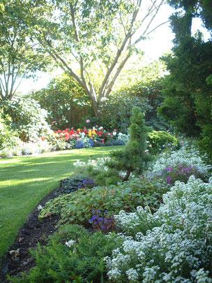 大きな植物が敷地の周りに植えてあるのでとても自然な感じのお庭になっている