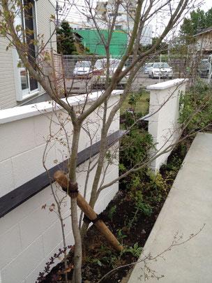 植えたての植木に倒れにくいように施す支柱