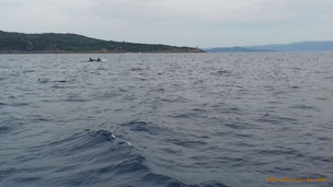 Dauphins à Port-Cros