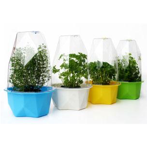 xala, kwekkkas, biosphere, groenten, moestuin, plantenbak, kweekpot, bloempot