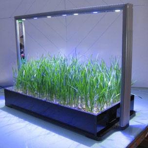 led, parus, mini farm, kweeksysteem, moestuin, kweken, plantenbak