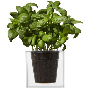 boske, cube, kunststof, bloempot, plantenbak, vensterbank, moestuin