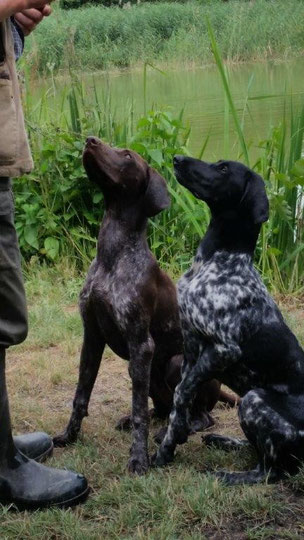 Arik (links ) und Ava vom Odins Wald am Hundewasser beim Üben