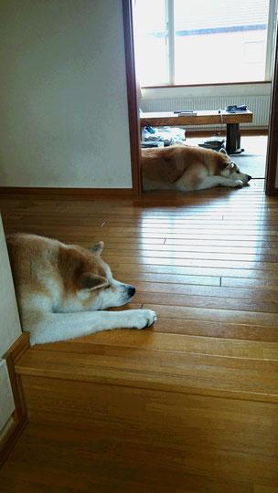 見て!まるで鏡だと思いませんか?スゴイ~~~^^双子か!(笑