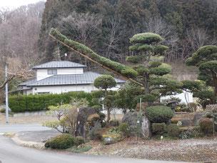 門かぶり松 一関 東山